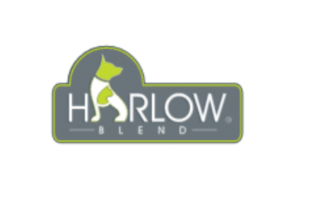 harlow-bled-canva